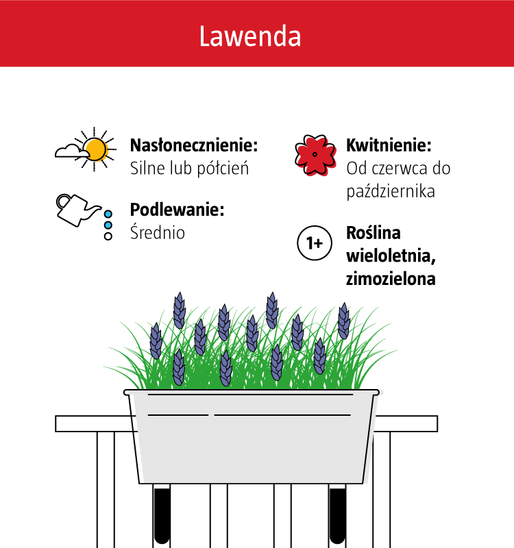 Jakie Kwiaty Na Balkon Które Lepiej Rosną W Słońcu A Które