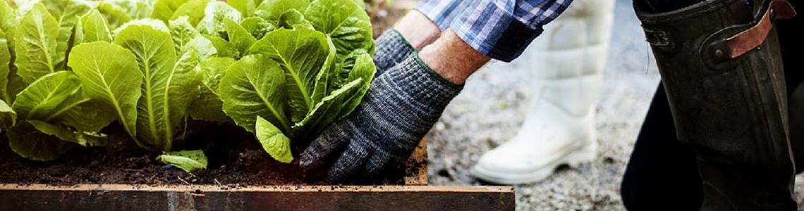 dla całej rodziny najlepsze podejście zawsze popularny Ogrodek warzywny krok po kroku