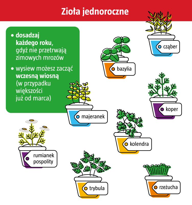 Plakat zioła